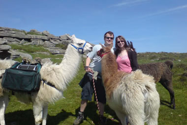 Alpacas and Llama Walks on Dartmoor