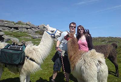 Llama Trekking on Dartmoor