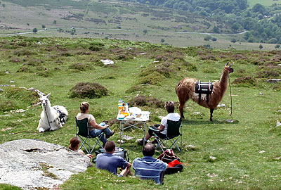Picnic on Dartmoor with Llamas
